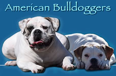 Responsible American Bulldoggers - A Global Community for American Bulldog Breeders, Owners, and Buyers